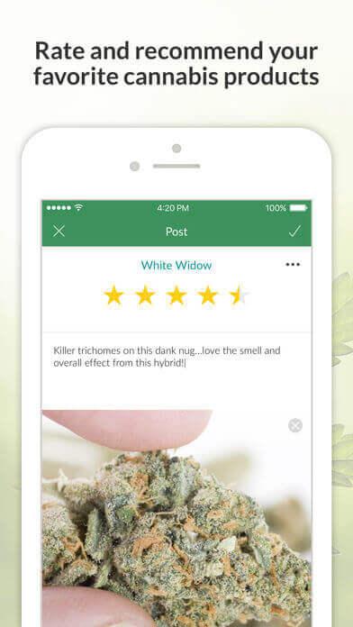 Mass Roots - אפליקציה למשתמשי קנביס רפואי